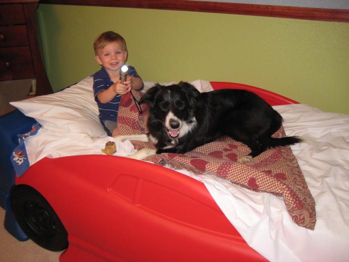 Bedflashlightdog
