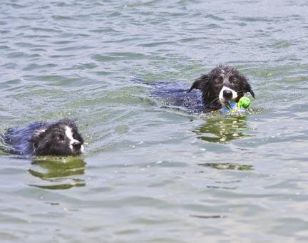 DogsswimLR