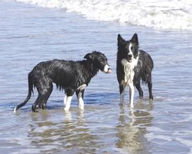 Dogsstandlr